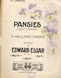 Pansies - Song - Based on Elgar's Salut D'Amour - Key of G major for Medium Voice